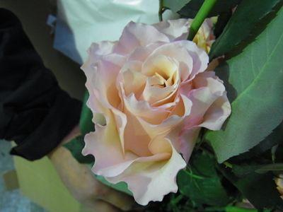 RIMG0919_R.JPG