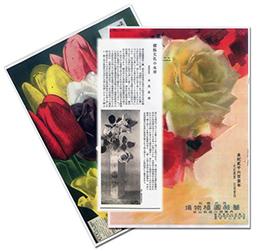 バラエン植物目録 第三百七十六號 (376号)