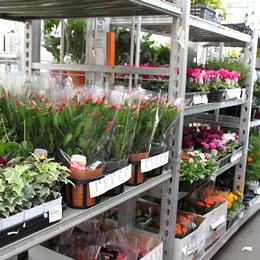 希少な直輸入植物と花鉢が豊富に揃っています