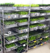 植物工場イメージ画像