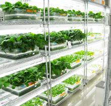 野菜工場イメージ画像