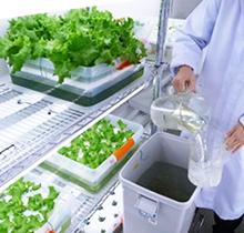 常に新鮮な栽培溶液を補充