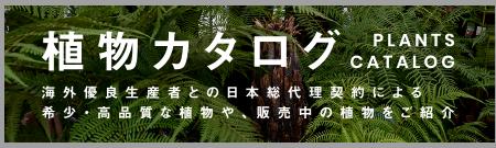 植物カタログ